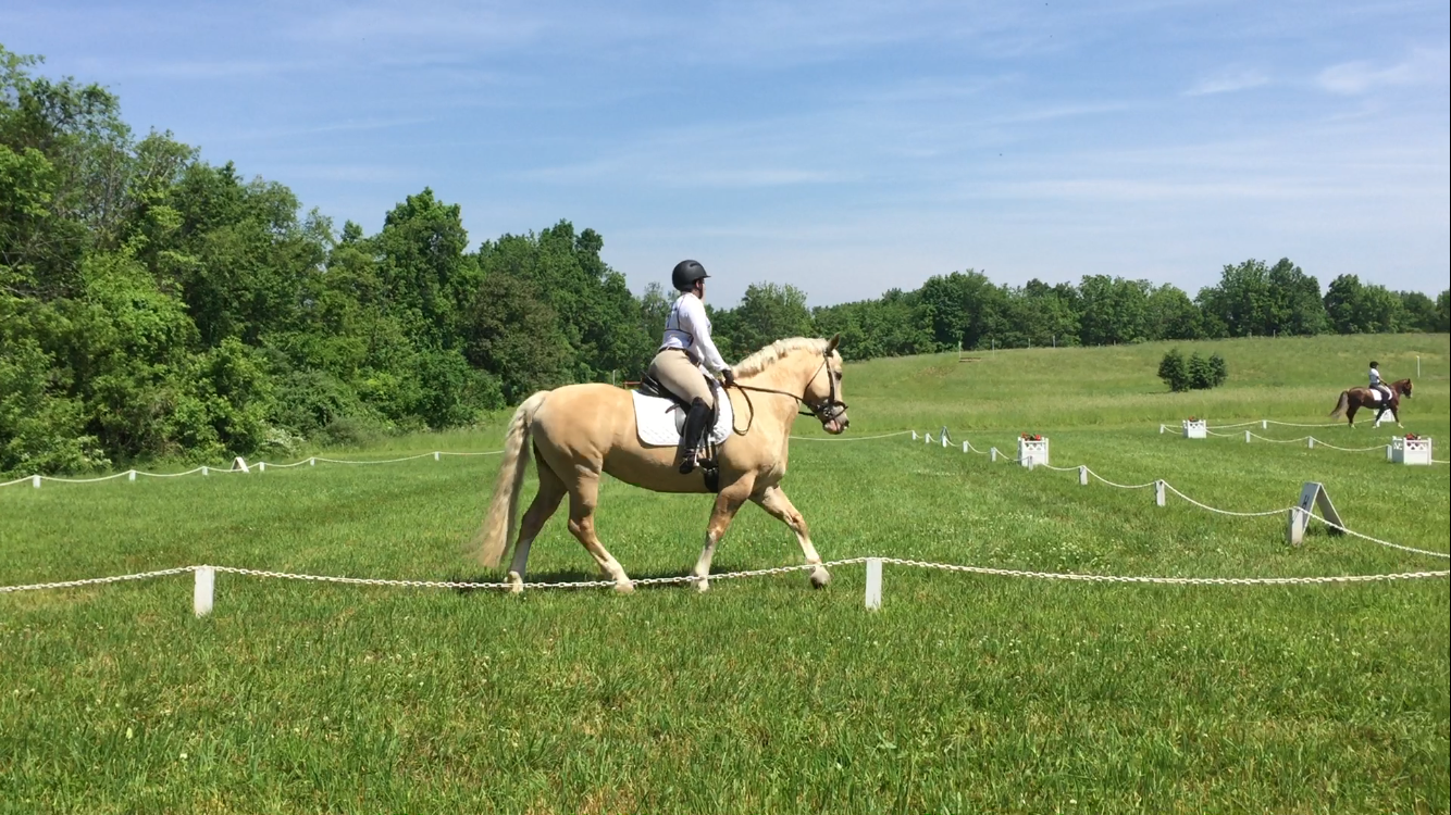 How to Have a Dressage Lesson Next to Polo Practice