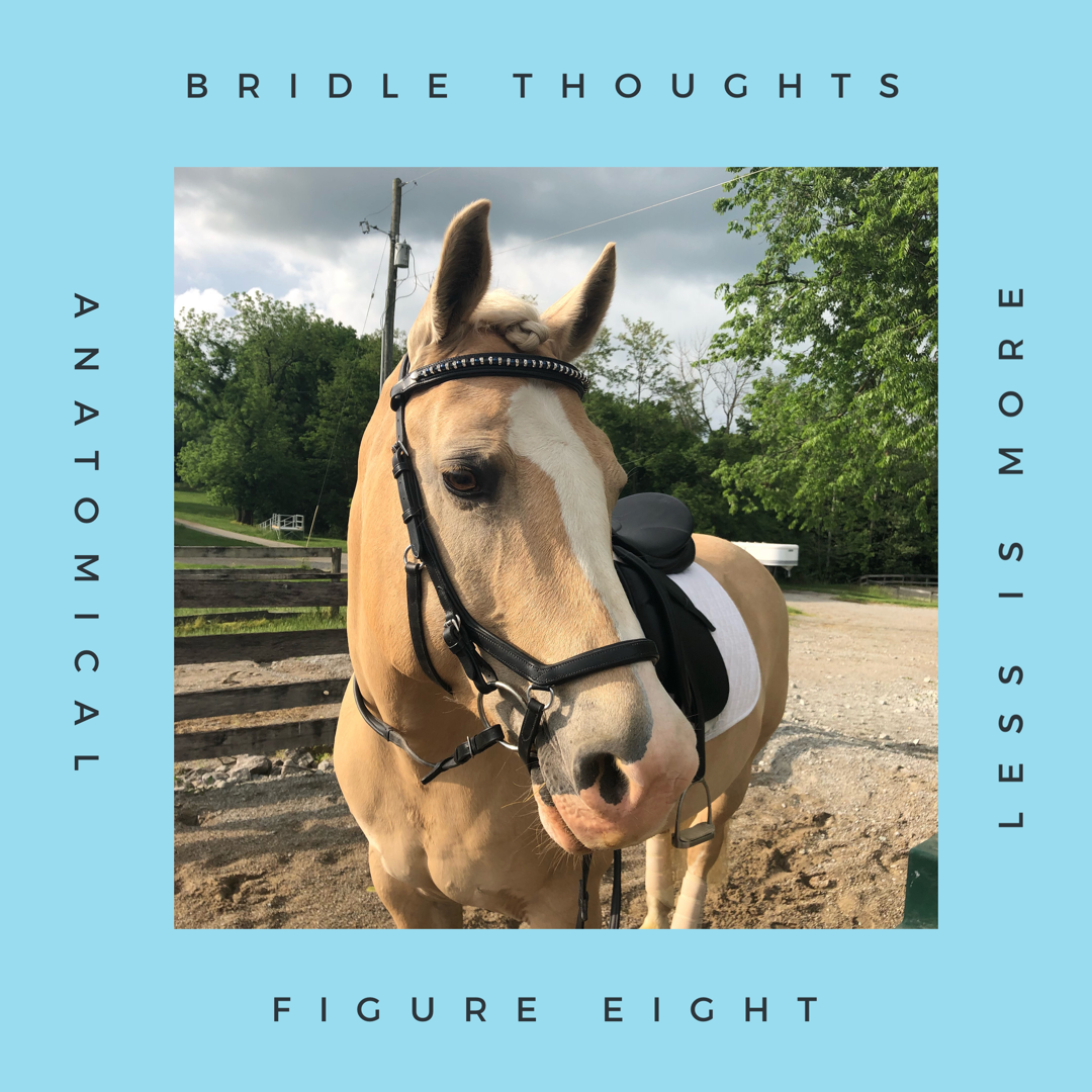A Long Term Bridle Review
