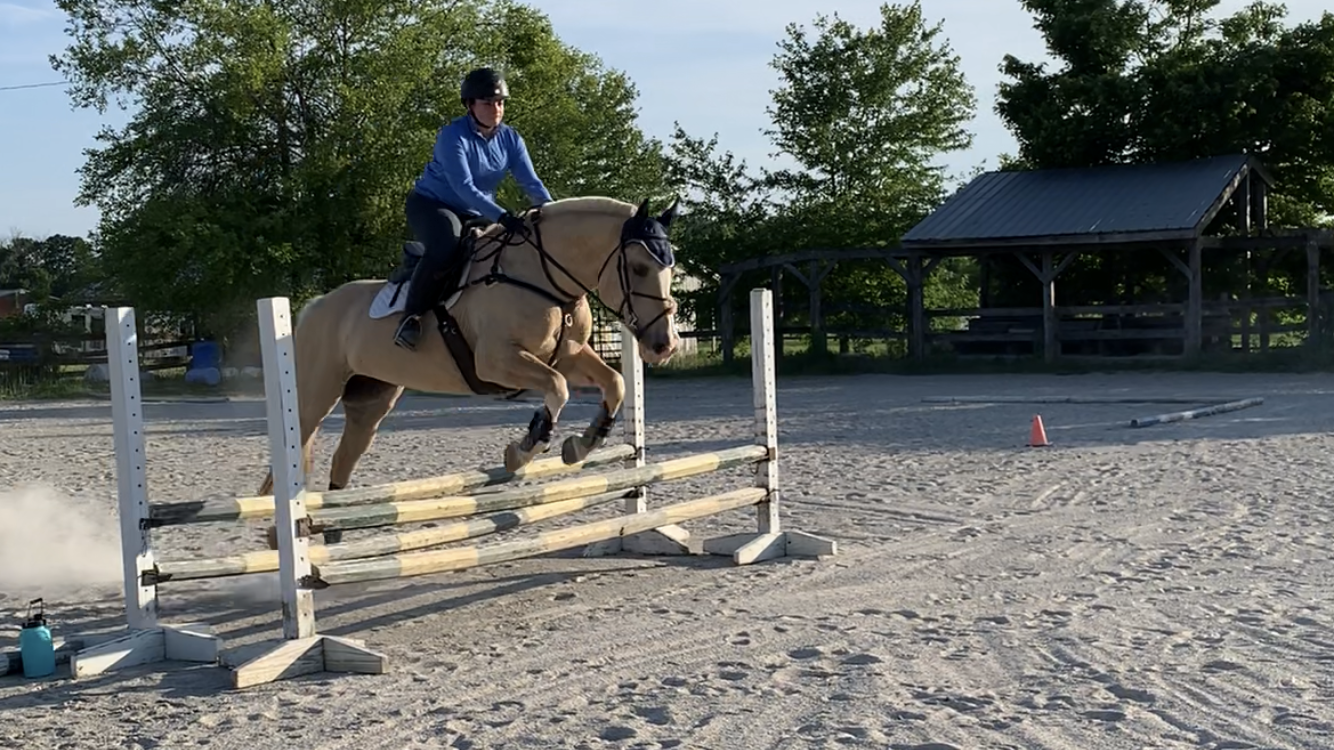 Saddle Fitting Session – County