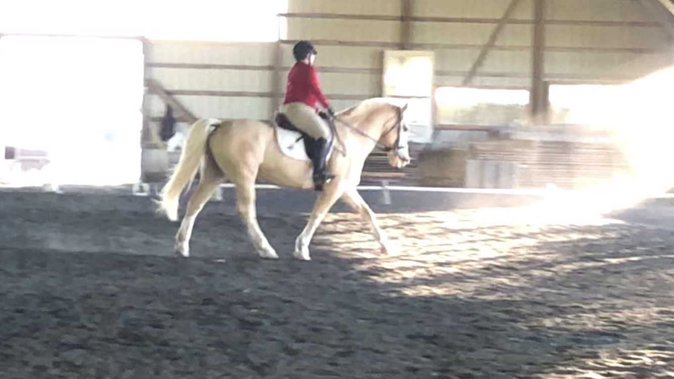 May Virtual Show – Dressage Results