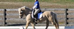 Dressage – This Thing I Attempt To Do