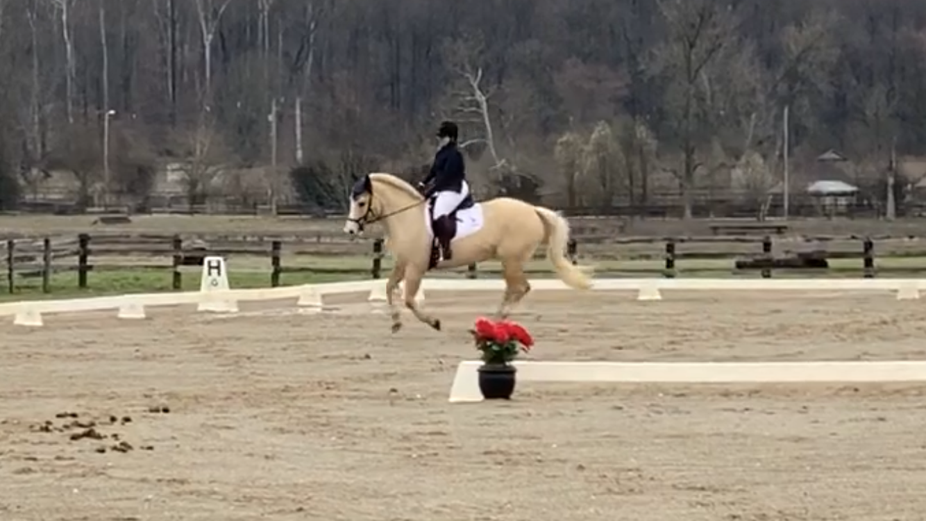 May Virtual Show – Dressage Self Scoring – Novice A