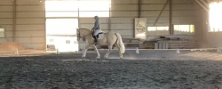 April Virtual Horse Show – Dressage