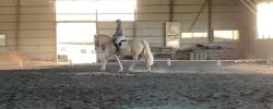 April Virtual Horse Show – Dressage