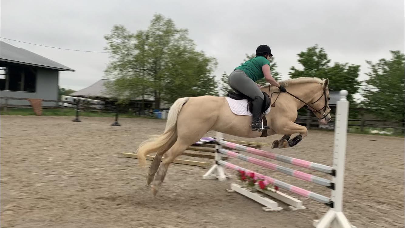 Jump Lesson & Vet Visit